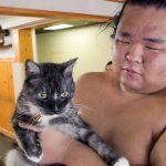 Как котаракът Моро стана талисман на японски сумисти
